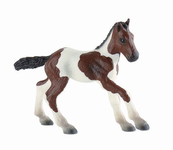 Paint Horse Fohlen